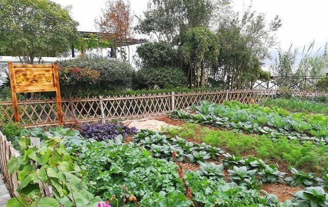 #种植蔬菜#农村自家小菜园,做好这3点,也可以种出无公害蔬菜