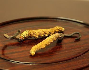 最好的精选那曲虫草价格多少钱一克 精选和统货、头草是什么意思
