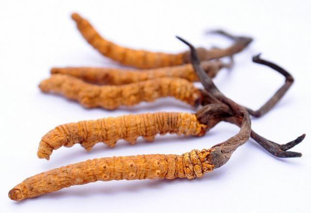 藏民大揭秘详解冬虫夏草的功效与作用和营养价值到底有多高?