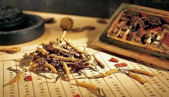 吃冬虫夏草可以补血吗?详解冬虫夏草对女性贫血的功效与好处?