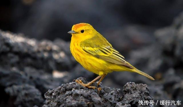 心理学:哪一只小鸟的叫声最动听?测你什么时候应该闭嘴?