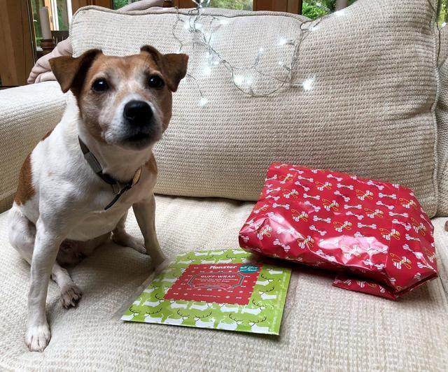 狗狗为什么喜欢撕纸?吃纸屑对它们身体有害吗?主人要如何阻止?