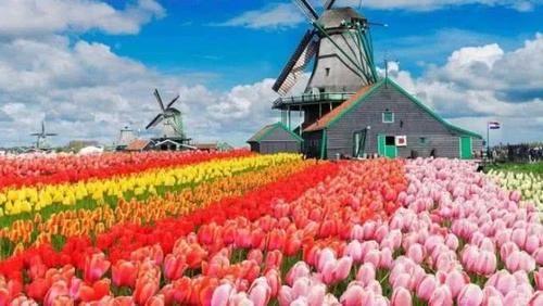 荷兰宣布元旦起正式改名,荷兰:大家以后叫我尼德兰,谢谢!网友:好的荷兰