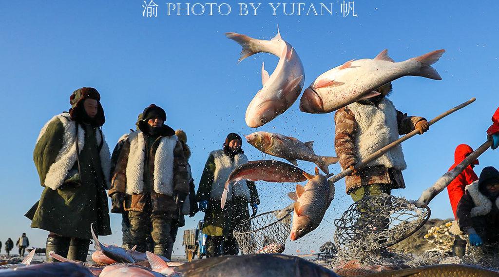 游东北不容错过的全鱼宴,只有查干湖才正宗,还是非物质文化遗产