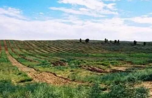 """「已成」全球首个被人""""干掉""""的沙漠,如今已成塞上绿洲,中国"""