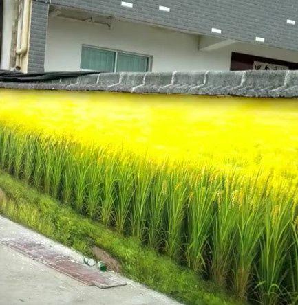 男子以为楼下种满了水稻,走进一看,却让大感意外