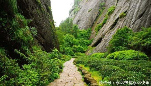 【价格】中国最贵的树,树叶比黄金价格还高,直接投保1亿元保险(二)