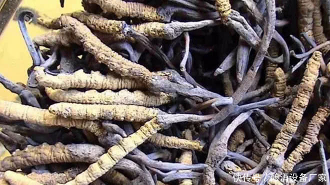 酿酒厂家告诉你冬虫夏草酒的制作方法-酿酒技术
