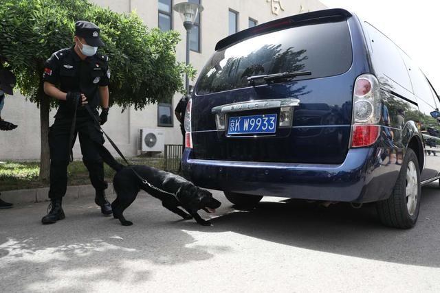 『技能』北京警犬可识别激光笔指令,搜爆技能升级至搜索枪支散件