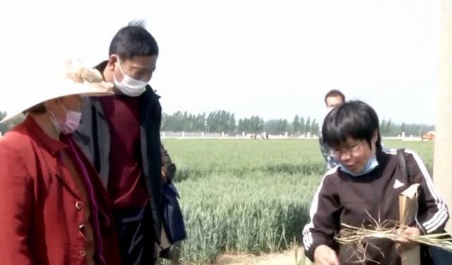 """确保■嘉祥开展""""一喷三防""""飞防作业 确保42000多亩小麦丰产丰收"""