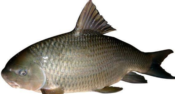 「下饭」蒸鱼干,小时候的味道,特别简单,特别清香,特别下饭