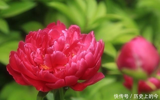 <b>春分种芍药,到老不开花,为啥芍药只能在秋季分株种植呢</b>