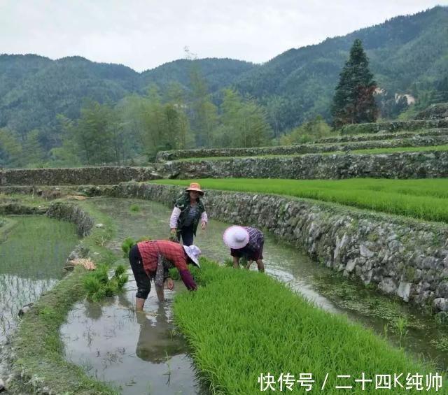 未来的的三种农业模式,向往的生活!
