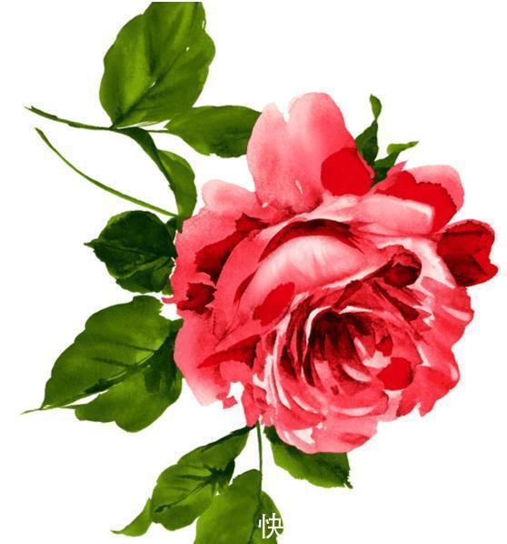 心理学:你更喜欢哪朵玫瑰?测你未来的婚姻会更幸福还是更煎熬!