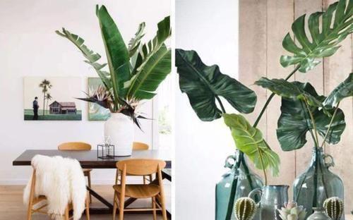 【寓意】这3类植物,寓意好,净化空气'吸'甲醛,欣赏价值高又好养