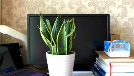 『辐射』客厅2个地方,千万别养花,不能忽视,养了也尽快搬走