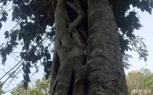 穆桂英大破天门阵所用的降龙木是什么东西?