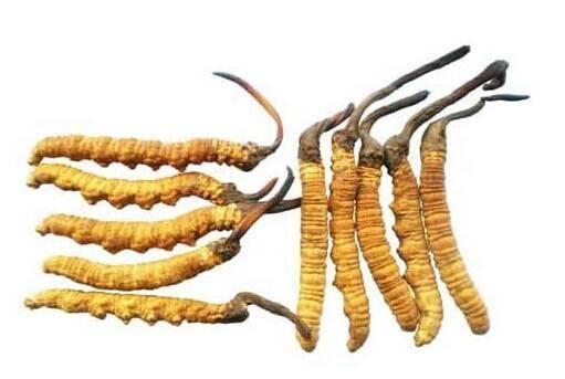 冬虫夏草-秋冬养生利器对免疫力差,术后,放化疗,肺肾肝病疗效