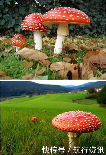 世界上最奇特的十大蘑菇!你认识几个呢