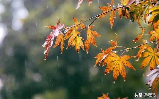 一场秋雨一场寒,给家人做顿鹿茸煲鸡汤,暖心暖胃又滋补