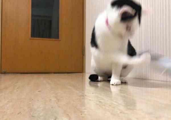 猫咪:铲屎的,你已经失去我了