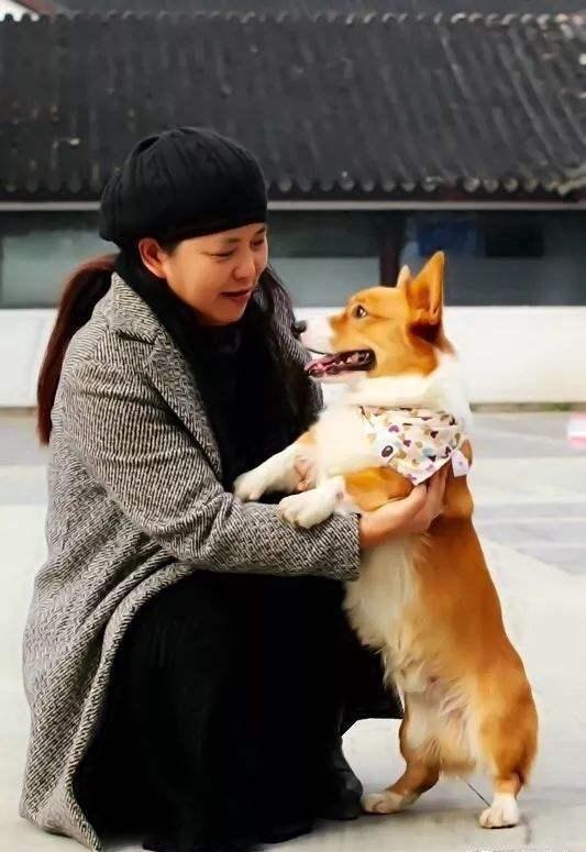 为什么养狗一定要养柯基犬,6个理由告诉你,太可爱了