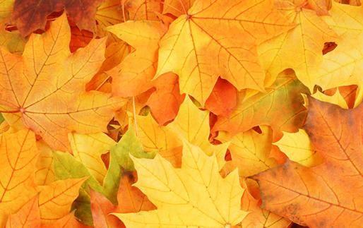 『奇效』这3种树身边常见,但它们的叶子对身体有奇效,为了健康赶快收藏