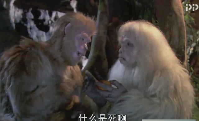 西游记中, 孙悟空已销毁猴类生死簿, 为何猴子仍难逃一死 原来我们想的太简单