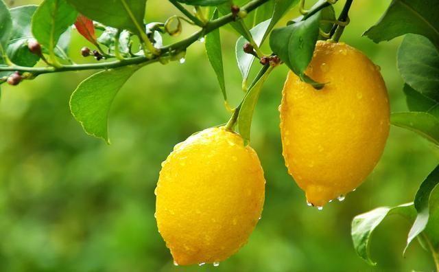 「做法」柠檬泡水喝有讲究,喝对了才会变白,快来看看正确的做法是什么