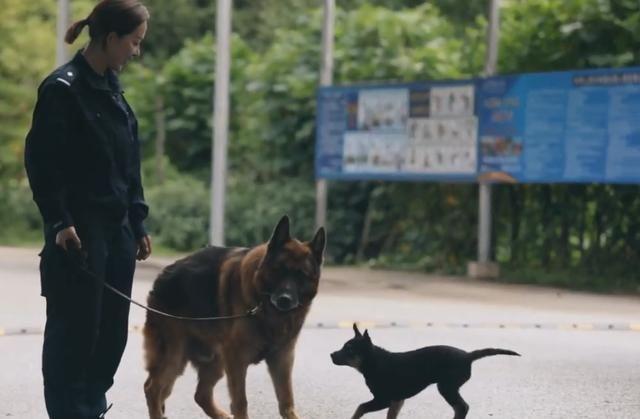 <b>10年警犬退役,狗狗被尊称老班长,每次看到大家出动还想跟去工作</b>