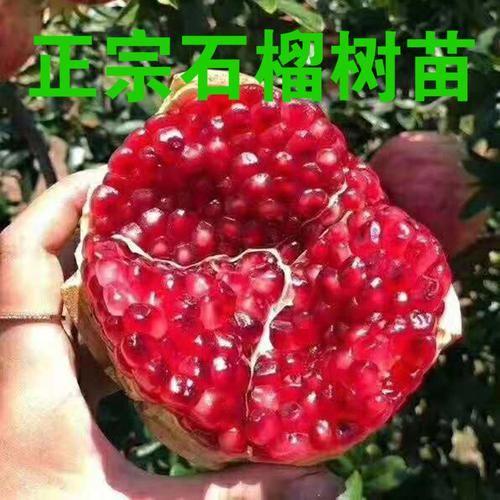 [建议]家里有地别荒芜!建议栽一棵果树,不占地,吃到嘴软