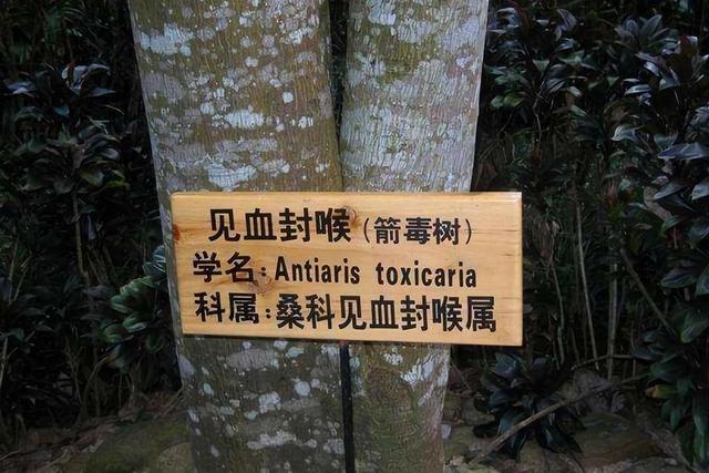 全球七大树中之最:最贵、最毒、最硬都在中国,你有见过吗?