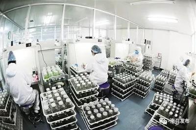 创新驱动点燃创业激情南召县科技创新亮点采撷