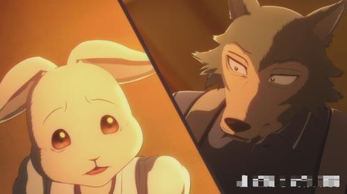 兔子有什么兔子