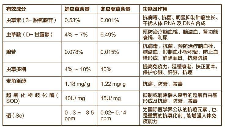 上海科学家发现蛹虫草能合成抗癌活性成分