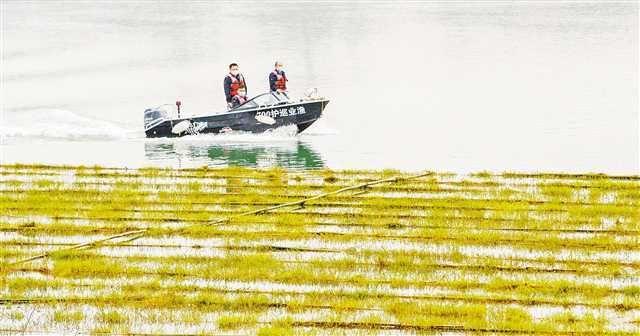 重庆今年已搭建6万多平方米人工鱼巢