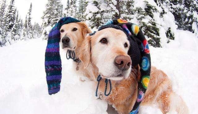 在冬季,狗狗很容易得这5种病,宠主不要忽视,且养且珍爱
