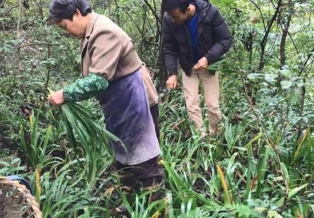 『农村』农村妈妈上山寻找这种野草,拿回家用来做美食,看看做的是什么