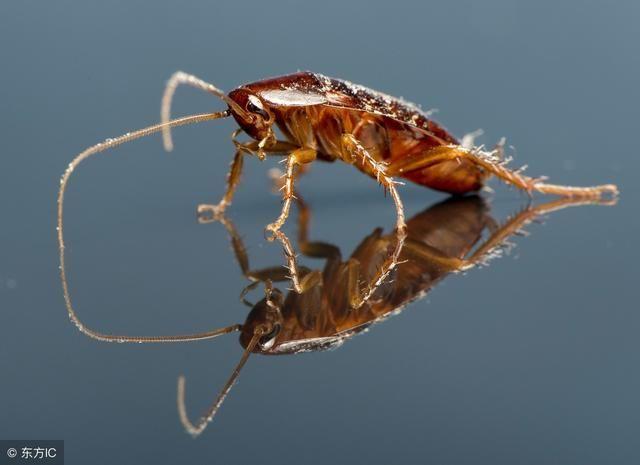 家里厨房蟑螂多?只需一片叶子,赶走蟑螂易如反掌!