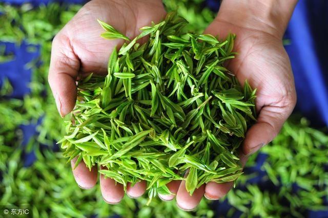 冬虫夏草可以和茶叶一起泡着喝吗?冬虫夏草常见配伍药方