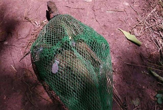 『小龙虾』养殖的比野生还贵,一只不足半斤能卖200元,养殖户却不敢投资
