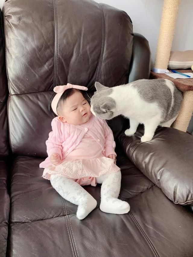 高冷猫咪也有柔情一面,不爱主人爱BB,化身猫保姆跟宝宝玩亲亲