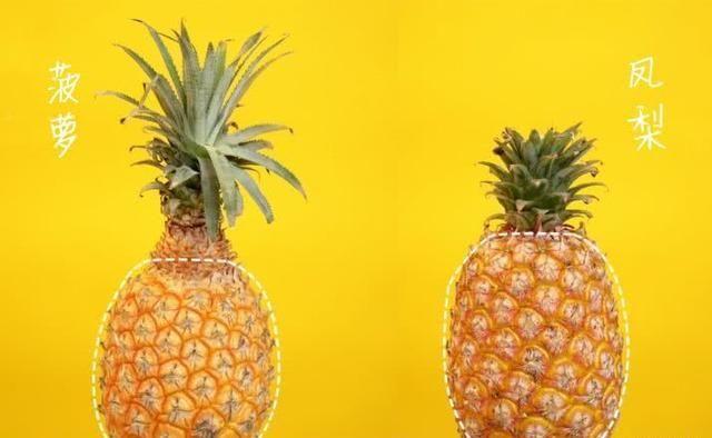 [傻傻]菠萝 VS 凤梨,傻傻分不清楚