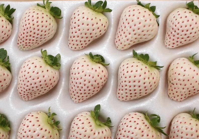上榜:我国最贵的几种水果,榴莲根本不上榜,最后一个咬一口都很难!