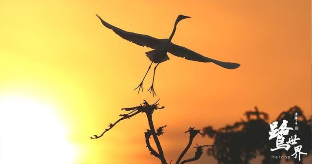 《鹭世界》曝故事版预告,看一只苍鹭的生存史诗