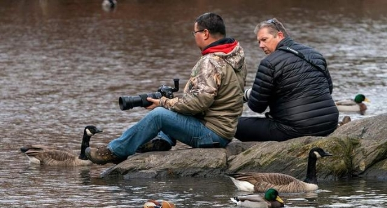 """美国公园发现一对""""中国鸟"""",引发全城围观,老外感叹:太漂亮了"""