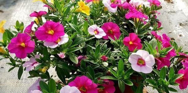 """这5种花草,最适合""""贱养"""",越是随意养护,生长就越是旺盛"""