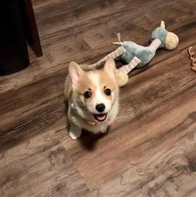 <b>刚开始养狗,主人要避免这6个误区,防止更大的麻烦</b>