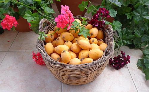 这水果浑身是宝,花和叶是天然止咳润肺药,但这部位和毒药有一拼
