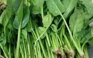 「菠菜根」推荐清淡爽口的家常菜,营养丰富,味道鲜美,简单葵,值得一试。